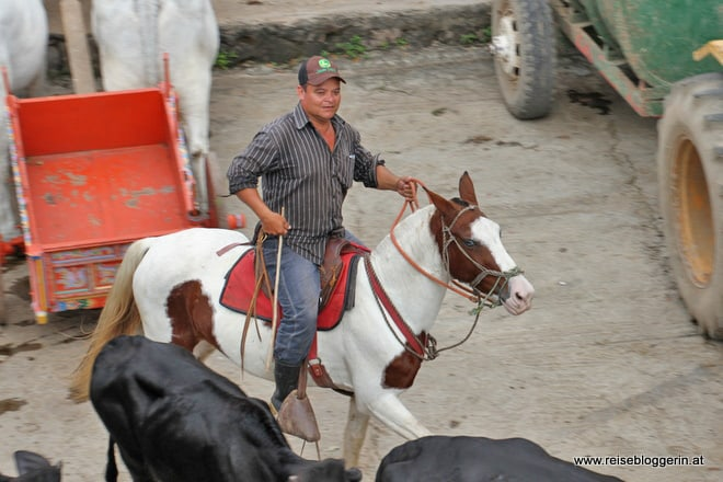 Cowboy auf der Hacienda
