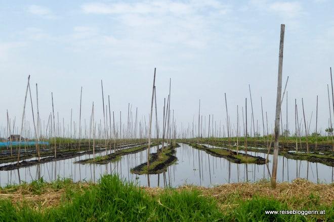 Schwimmende Gärten am Inle See