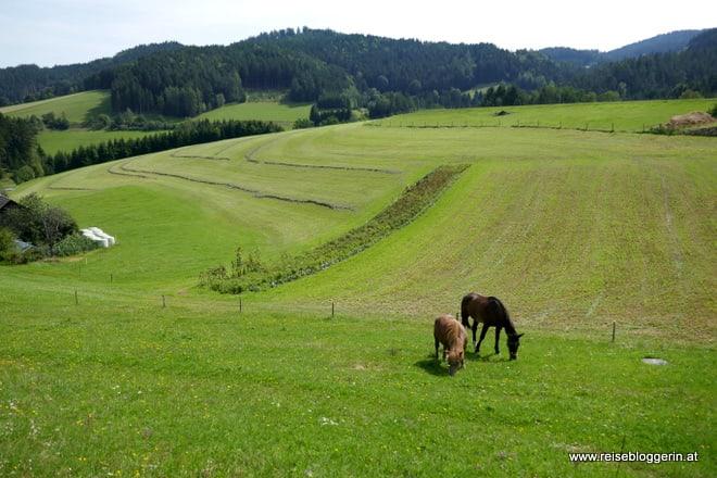 Pferde im Mühlviertel