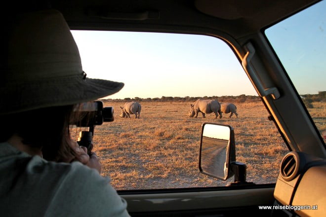 Auf Safari in Botswana