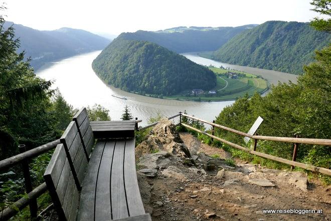 Donauschlinge in Schlögen