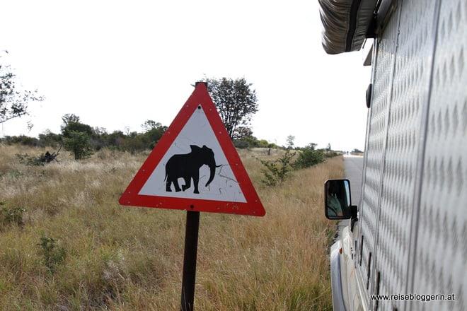 Auf Safari in Afrika