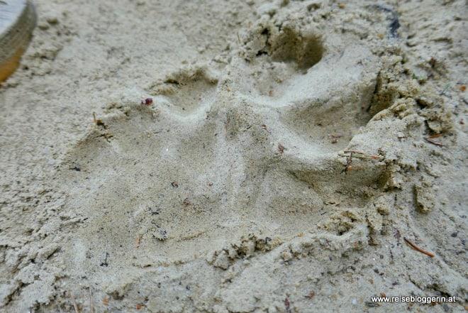 Tierpuren im Sand