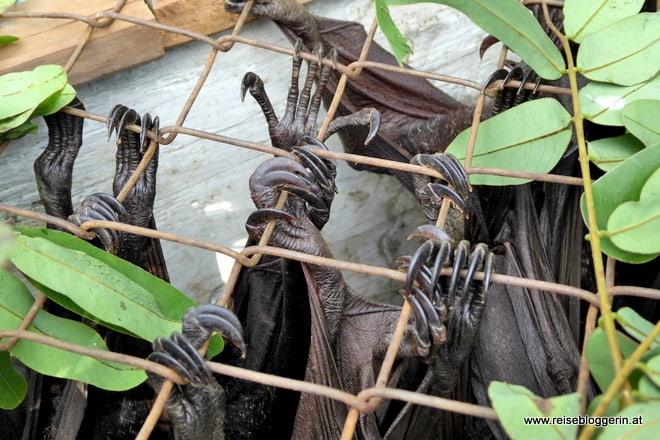 Flughunde sind eine Delikatesse auf Sulawesi
