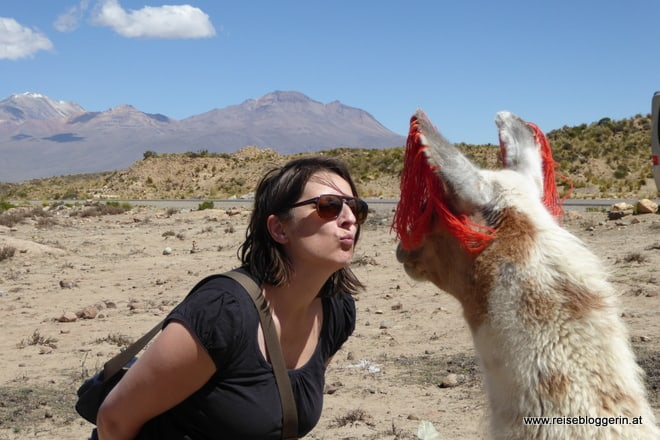 Ein Lama knutschen in Peru