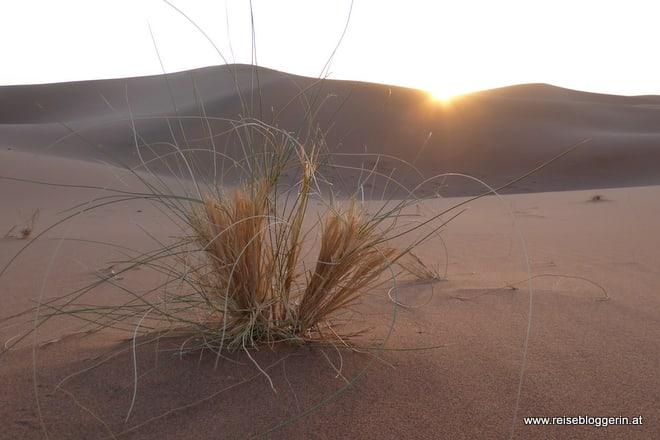 Das Licht in der Wüste