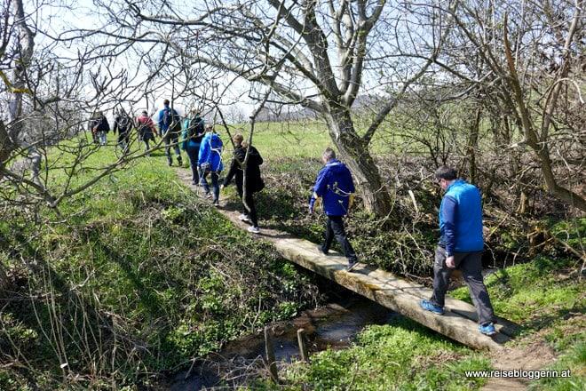 Kirschblütenwanderung in Purbach