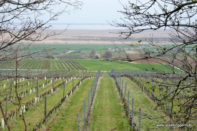 Weinwanderung in Purbach