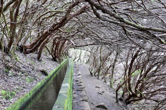 Levada Madeira