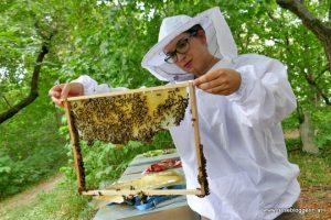 Sabrina Haupt bei der Bienentour