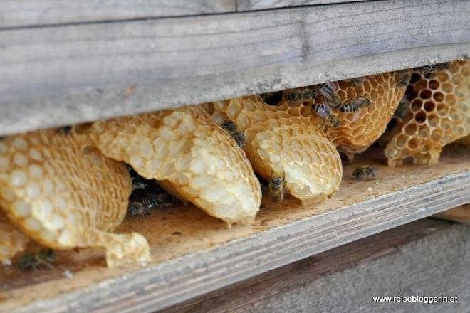Wildbau der Bienen