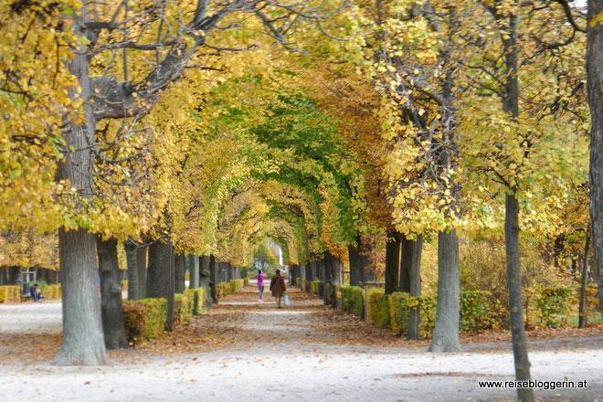 Allee in Schönbrunn