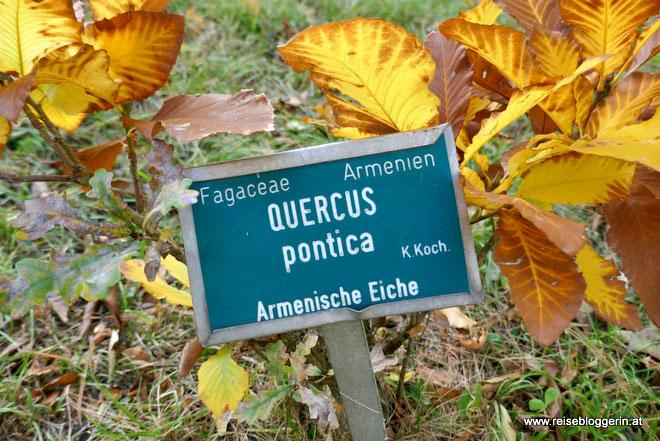 Botanischer Garten in Schönbrunn