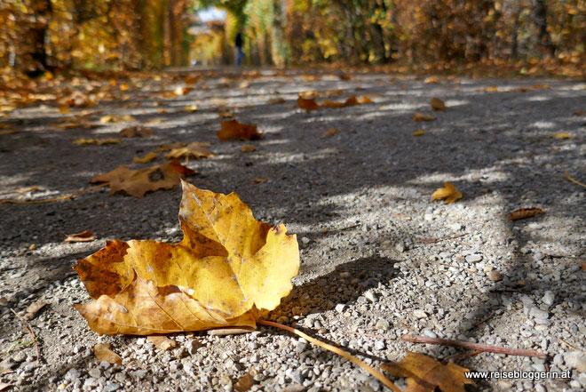 Herbstlaub in Schönbrunn