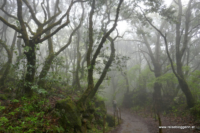 Lorbeerwald Madeira