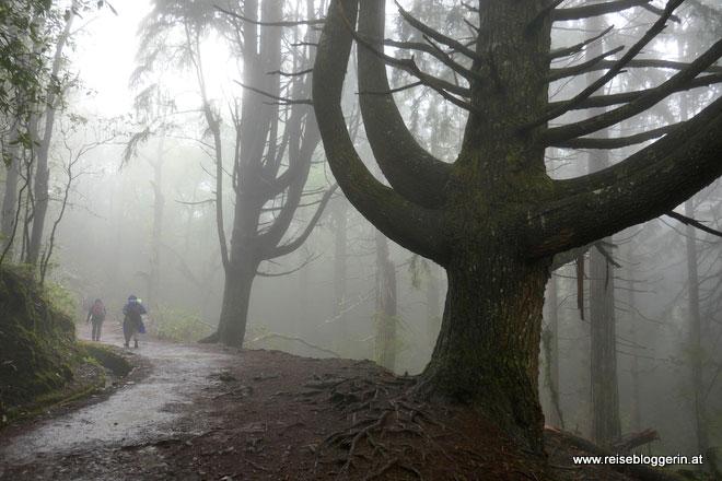 Wandern zum Wasserfall Caldeirao Verde