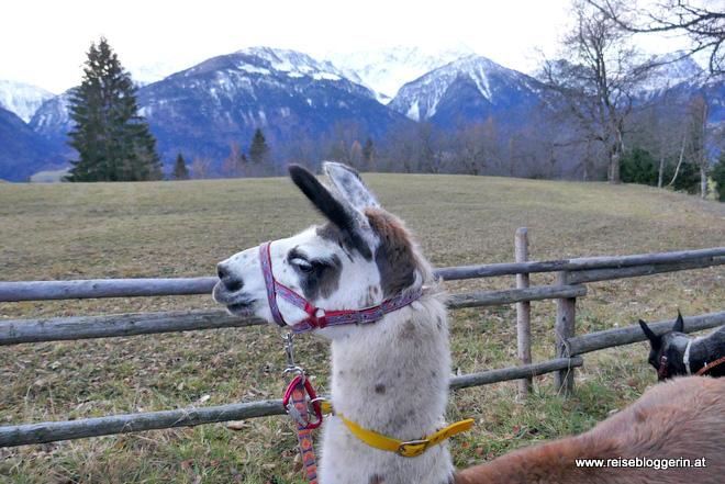 Lamatrekking in Kärnten