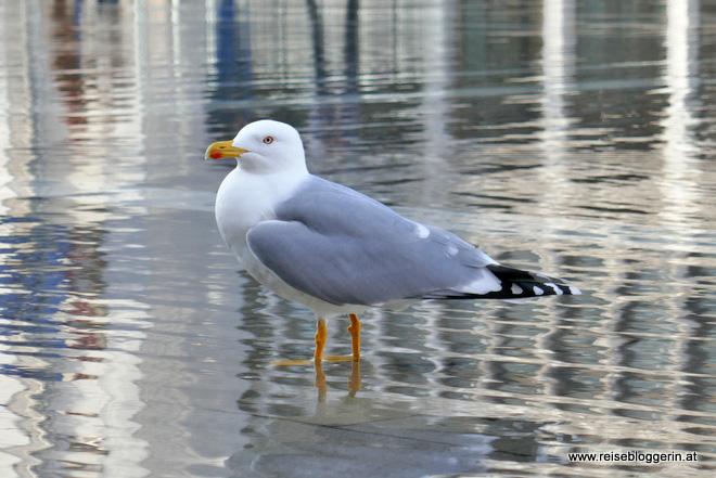 Füttern verboten! Eine Taube am Markusplatz