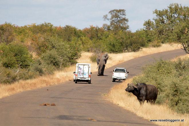 sicher unterwegs im Kruger Nationalpark