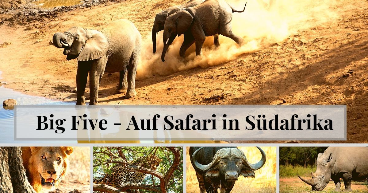 The Big Five – Auf Safari in Südafrika