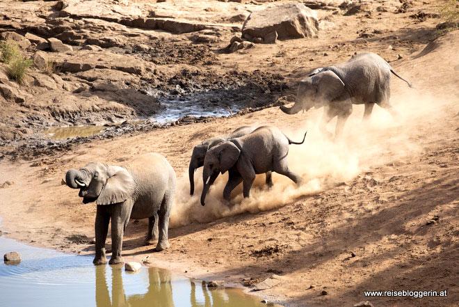 Elefanten im Kruger Nationalpark
