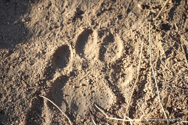 Leopard Abdruck