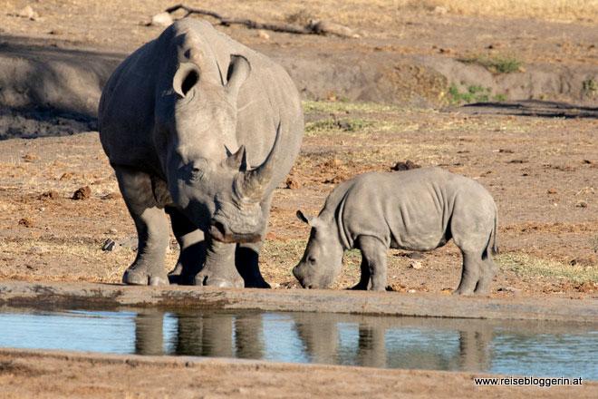 Nashorn mit Nashornbaby