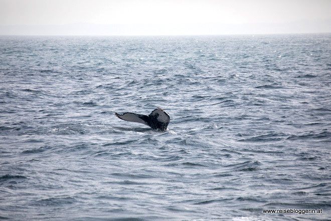 Whalewatching in Südafrika