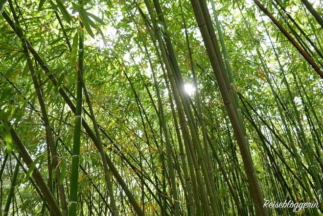 Der Bambuswald im Botanischen Garten