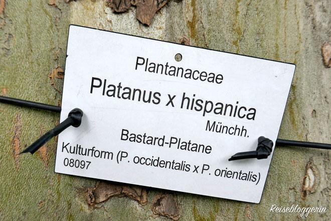 Die Beschriftung im Botanischen Garten