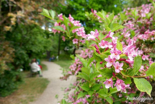 Botanischer Garten in Wien