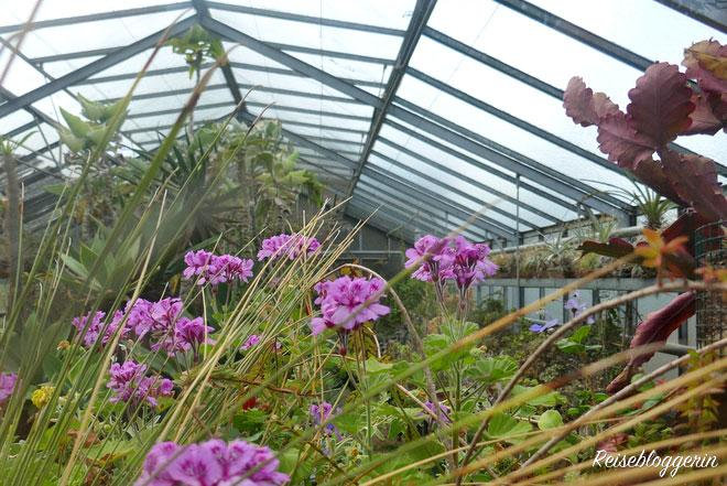 Glashaus im Botanischen Garten