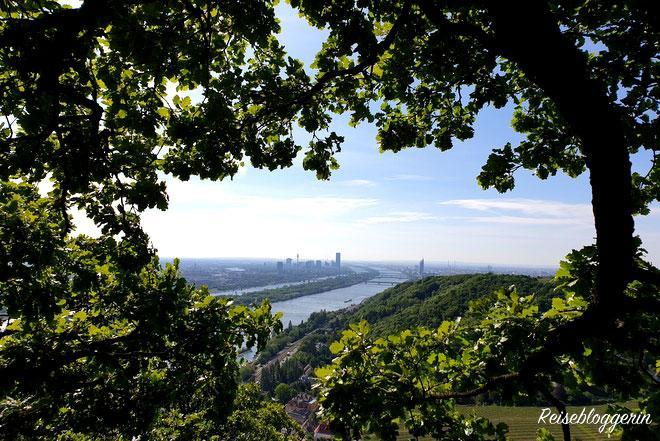 Blick auf Wien durch die Baumkronen