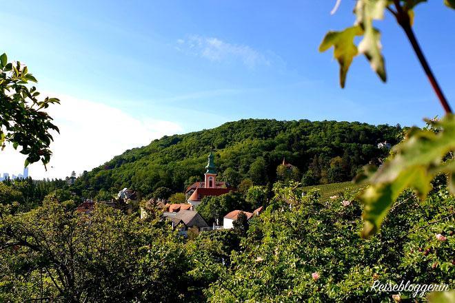 Ein Dorf mit Kirche umgeben von Weinbergen