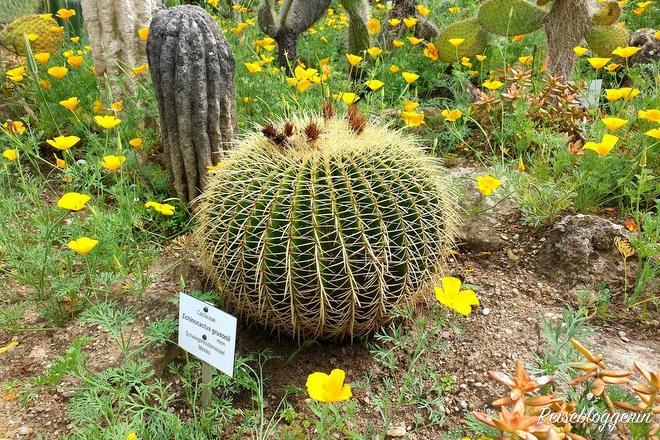 Kaktus im Botanischen Garten in Wien