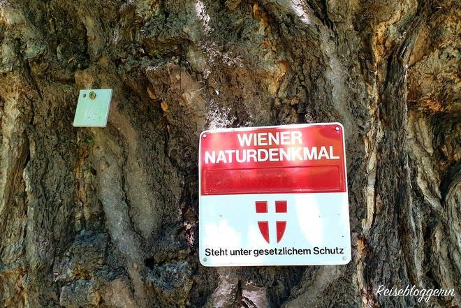 Wiener Naturdenkmal im Stadtpark