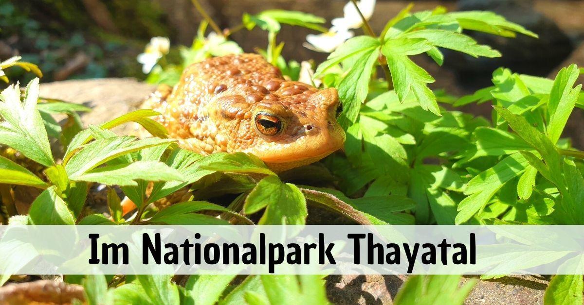 Im Nationalpark Thayatal - Der kleinste Nationalpark in Österreich