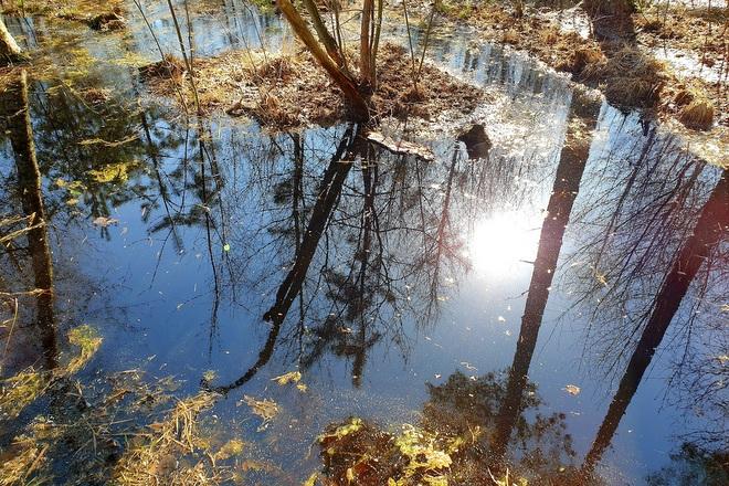 Wasser und Schatten von Bäumen im Heidenreichsteiner Moor