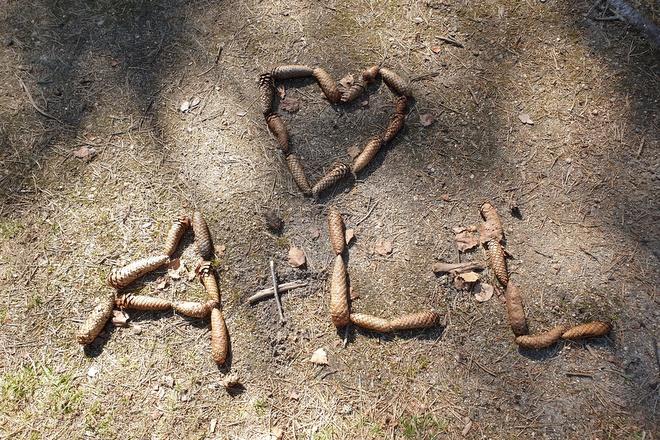Herz und Initialen aus Tannenzapfen im Moorwald Heidenreichstein
