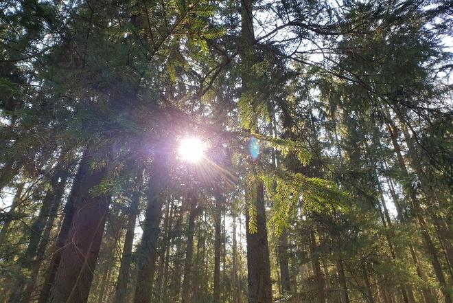Bäume im Moorwald Heidenreichsteiner Moor