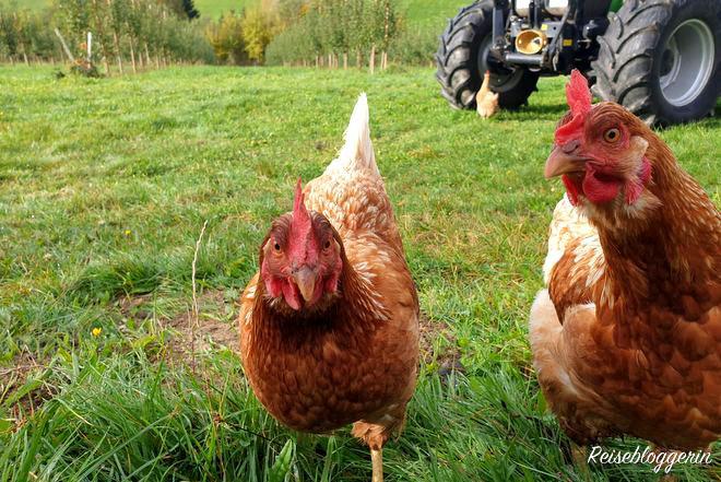 2 Hühner