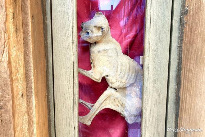 mumifizierte Katze