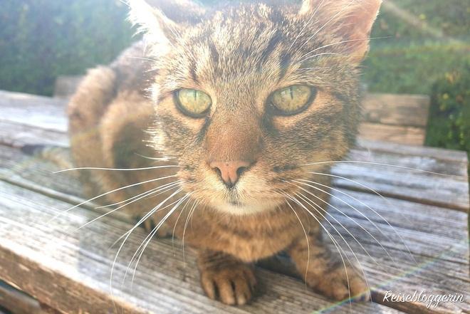Katze am Gut Trögern