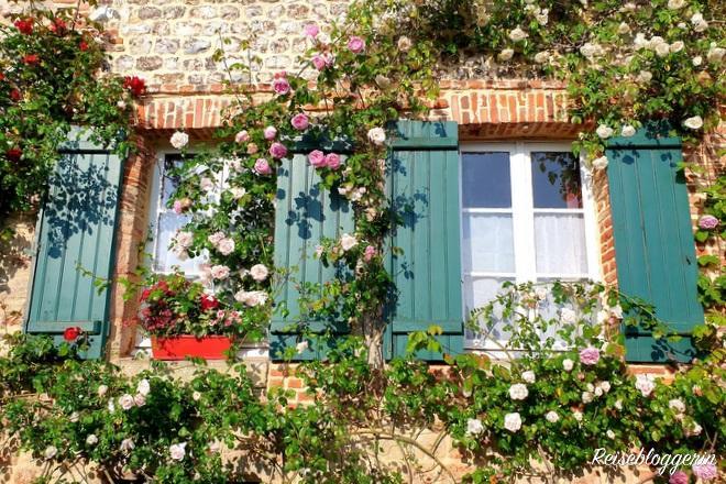 Rosen im Dorf Veules-les-roses