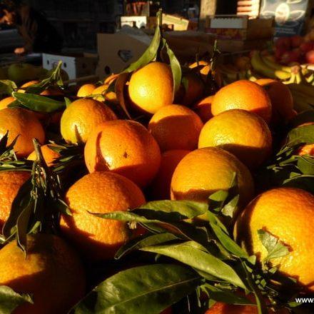 Orangen in Nizza