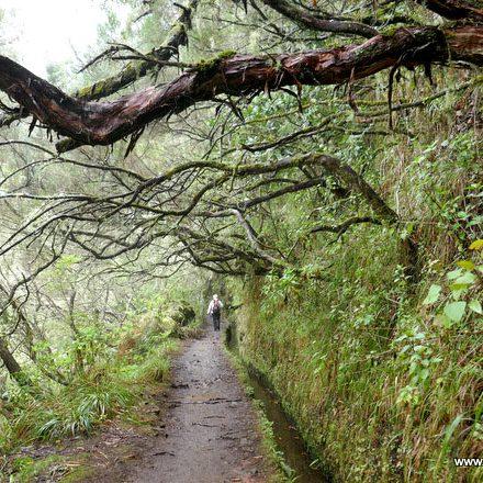 Wanderung auf Madeira durch den Lorbeerwald